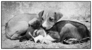 stray dog-puppies
