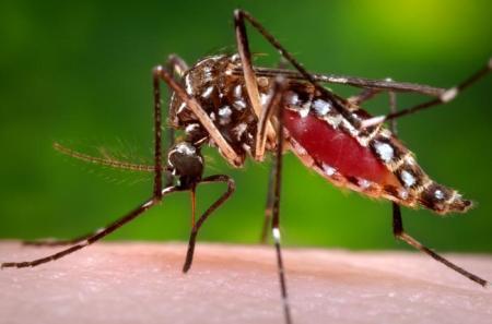 Squito